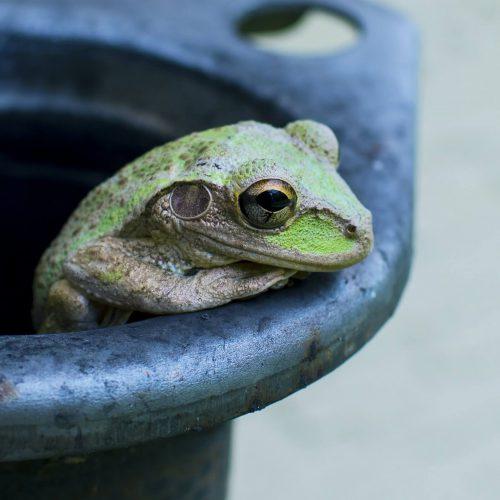 Portada - La famosa parábola de la rana